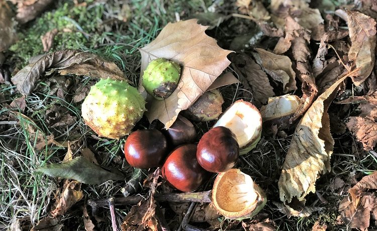 Herbstanfang 2018